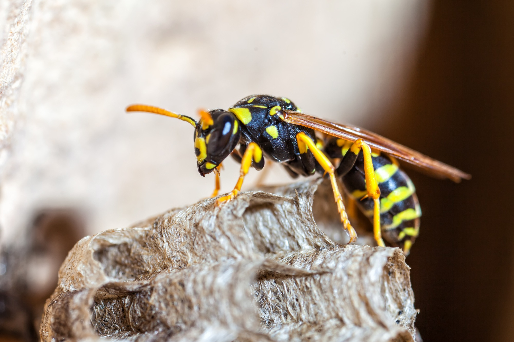 wasp removal process