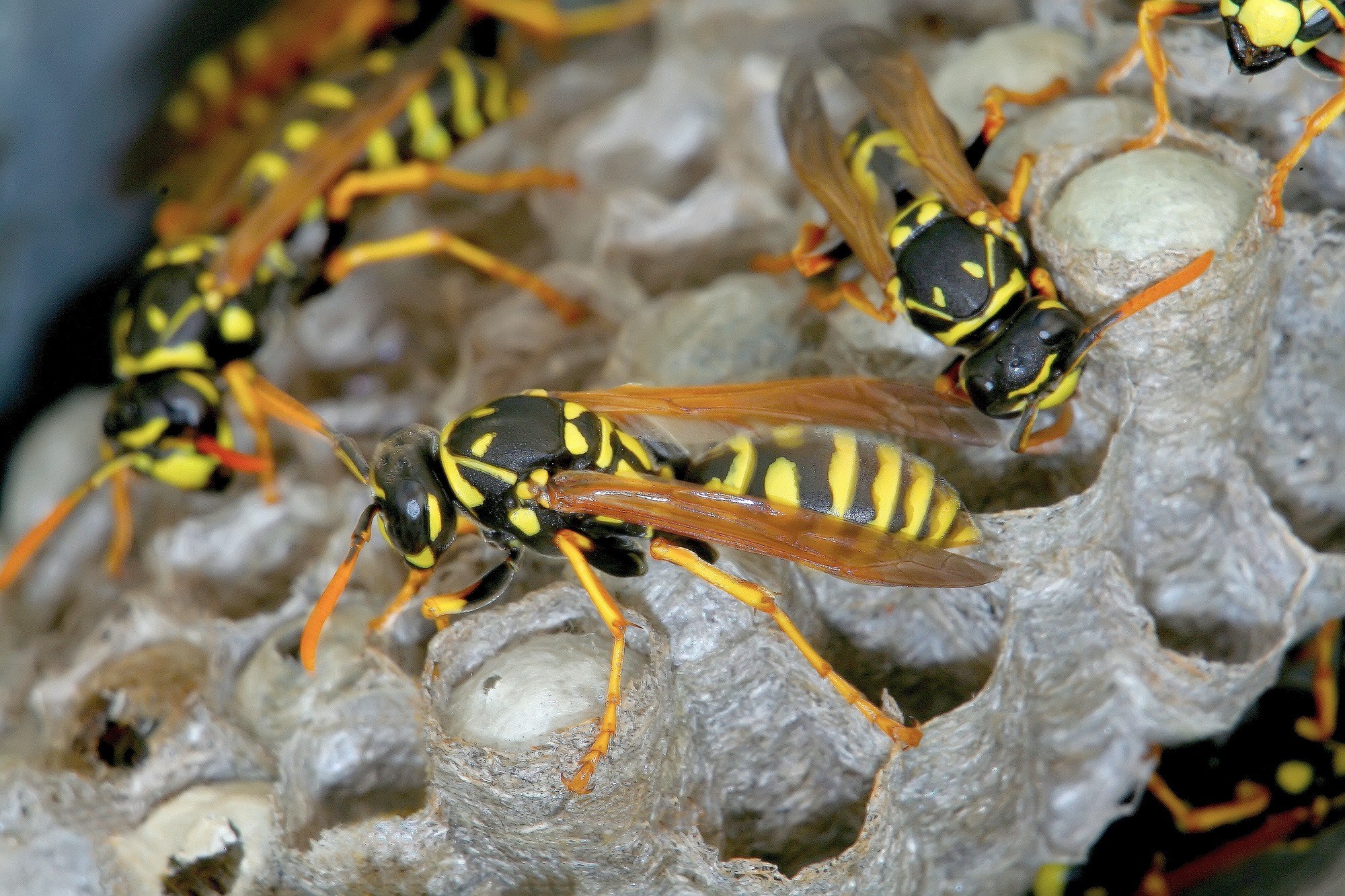 How to Get Wasps Out of Your House