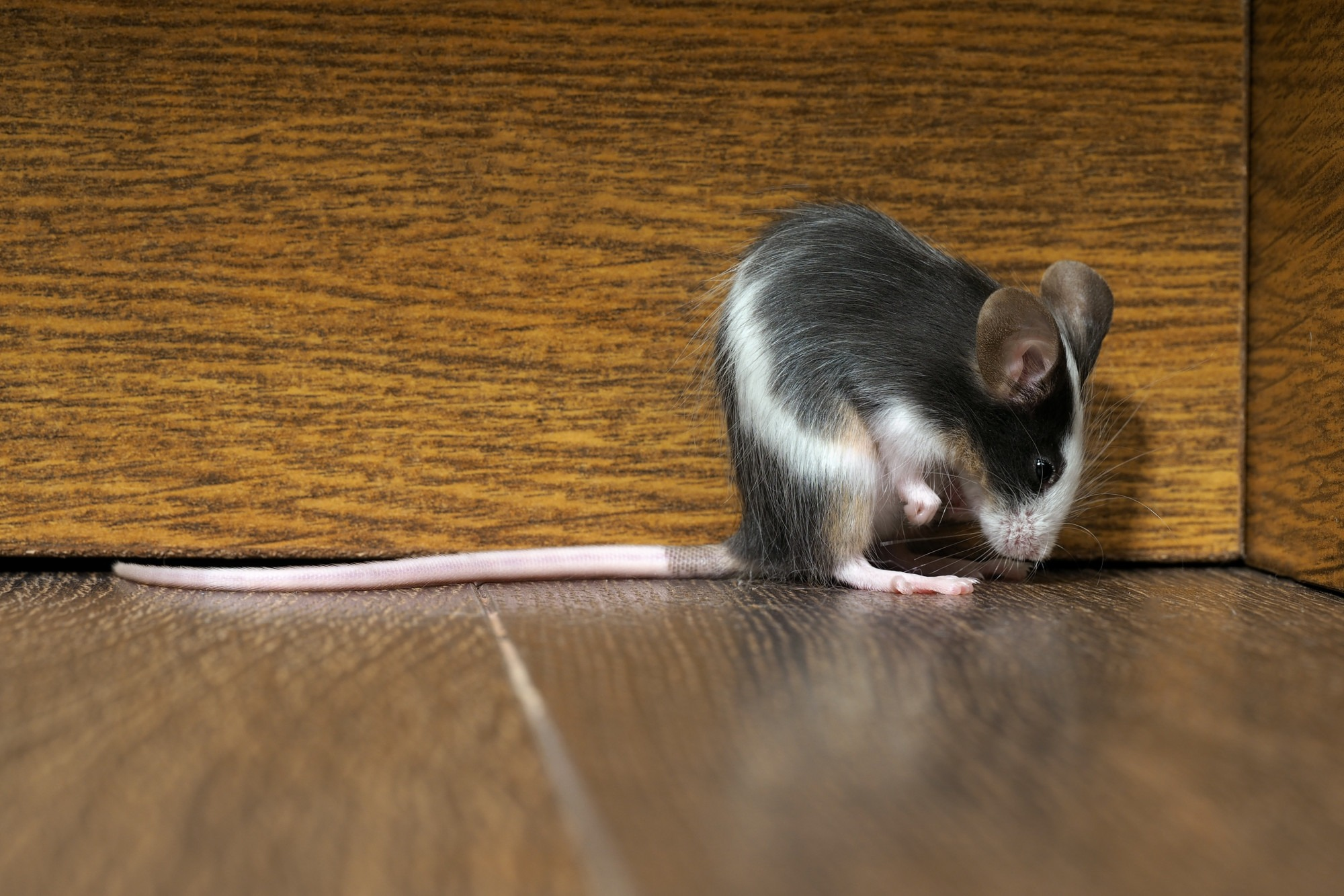5 Signs That You Should Call Pest Control Services Immediately