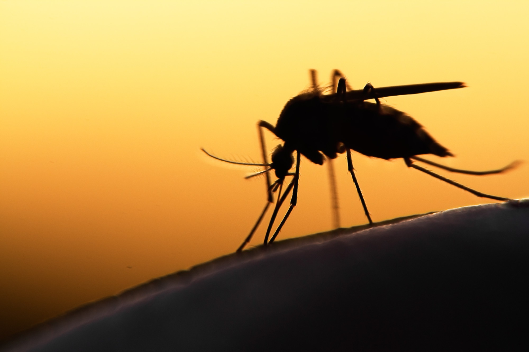 How to Know if You Need Mosquito Control Services